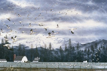 Geese Flying Over Farmland by Jeff Tift art print