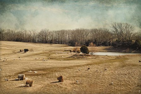 Sheep In The Meadow by Jai Johnson art print