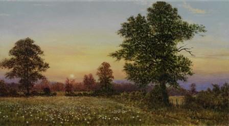 Evening Daisies by Bill Makinson art print