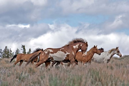 South Steens Mustangs by Larry McFerrin art print